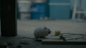 The Mouse